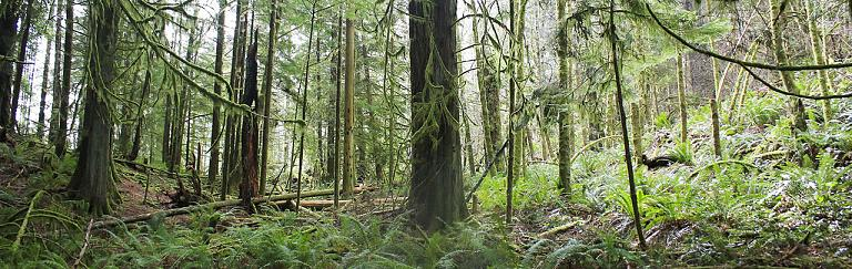 Goldstream Gold Mine Trail