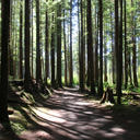 The forest at the start of the trail to China Beach