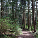 Walking through the forest trail at Devonian Regional Park in Metchosin