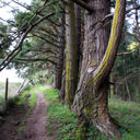 The trail along the border of Devonian Regional Park in Metchosin