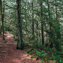 The Goldmine Trail in Goldstream Provincial Park.