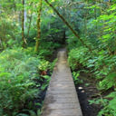 A small bridge crosses a muddy area along the Ridge Trail in Horth Hill Regional Park