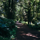 The easy, forested trail to Iron Mine Bay in East Sooke Park.