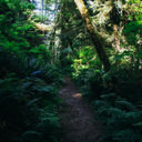 The trail to Pike Point in East Sooke Park.
