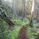 The hiking trail to Jocelyn Hill from the McKenzie Bight area in Gowlland Tod Provincial Park.