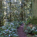The scenic forested Skipper's Trail in John Dean Provincial Park