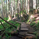 The Juan de Fuca Trail heading towards Mystic Beach