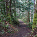 The trail that leads from the Galloping Goose to the shoreline along Roche Cove