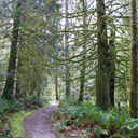 A forested trail near Matheson Creek in Roche Cove Regional Park