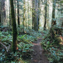 The Phelps Trail through the lush forest on the way back to Upper Thetis Lake.