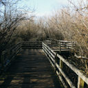 The floating wooden bridge along the trail around Swan Lake in Victoria, BC.