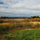 The view of the grassy area and bird habitat around Swan Lake in Victoria, BC.