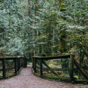 A wooden walkway along the trail to Tod Inlet helps protect the sensitive eco-system.