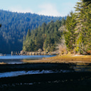The old pier at Tod Inlet, viewed from the mouth of the creek
