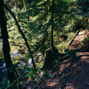 The hiking trail that follows the creek from Tod Inlet.