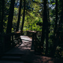 The wooden bridge that crosses over Sitting Lady Falls on the Beach Trail at Witty's Lagoon.